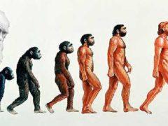 Пришедшие со звёзд: теория Дарвина — сомнительная теория происхождения людей?