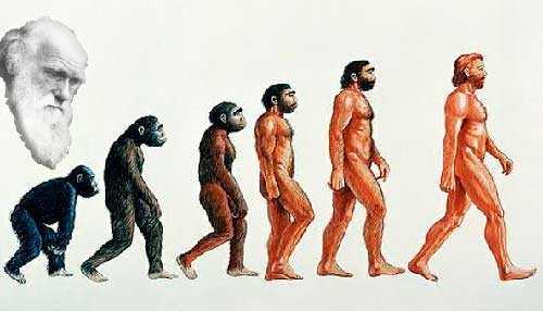 Картинки по запросу эволюционная теория происхождения человека