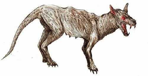 чупакабра - козий вампир
