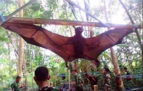 крылан - самый страшный вампир Земли