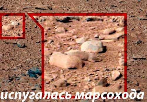 напуганный ровером марсианский грызун