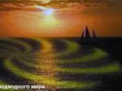 Квакеры — загадочные обитатели морских глубин.