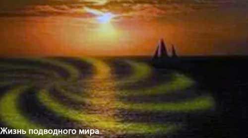 Жизнь подводного мира «светящиеся звезды»