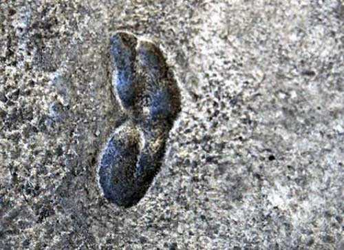 нашумевший слепок следа, оригинал на почве разрушился