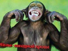 Нет сомнений в происхождении человека от обезьяны.