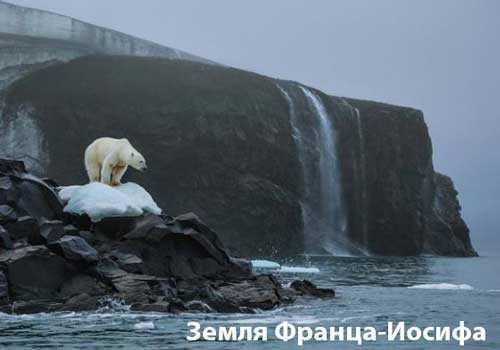 Полярный медведь острова Рудольфа на российском архипелаге Земля Франца-Иосифа обескуражен таянием многолетнего льда