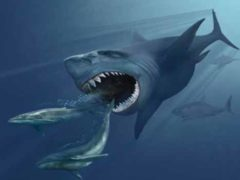 Акула Мегалодон все еще подстерегает в море?