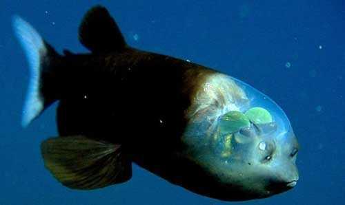 рыба с уникальными глазами
