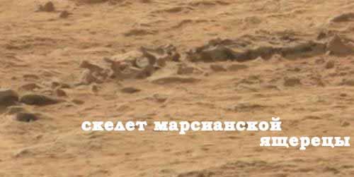 Скелет марсианской ящерицы с фрагментами позвонков