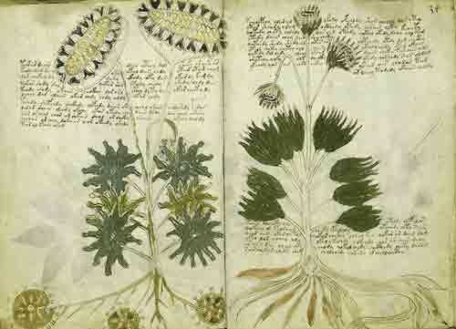 Иллюстрации в манускрипте Войнича