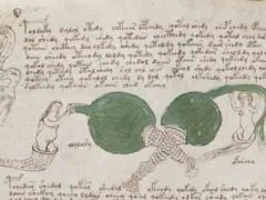Британский лингвист расшифровал манускрипт Войнича.
