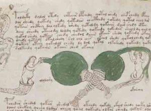 Смог ли искусственный интеллект расшифровать рукопись Войнича?