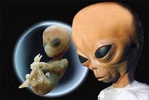 Похищенные пришельцами, гибридные дети