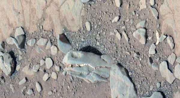 На планете Марс могли жить динозавры