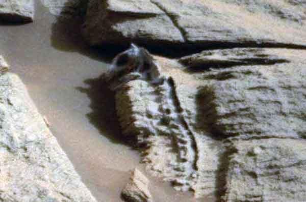 скелет марсианского существа