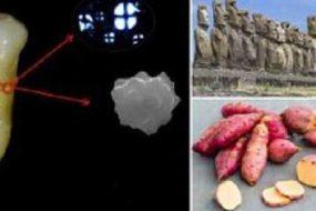 Цивилизацию острова Пасхи уничтожил картофель батат.