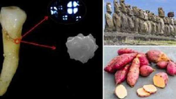 гибель существовавшей на острове Пасхи цивилизации принес картофель батат